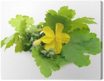 Obraz na Płótnie Pojedyncze kwiaty glistnik