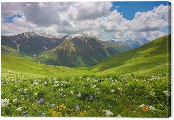 Obraz na Płótnie Pola kwiatów w górach. Gruzja, Swanetia.