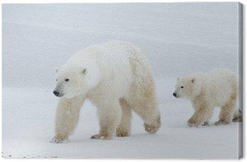 Obraz na Płótnie Polar Bear i mama kuba chodzenia na lodzie