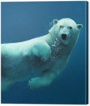 Obraz na Płótnie Polar bear podwodne zbliżenie
