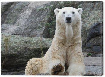 Obraz na Płótnie Polar Bear Portrait.