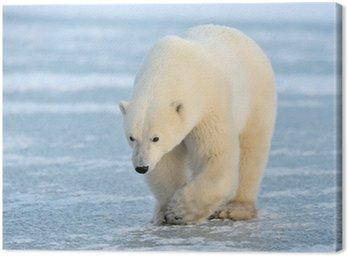 Obraz na Płótnie Polar Bear spaceru na niebieskim lodem.