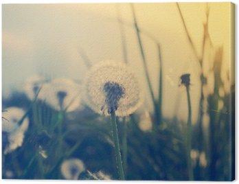 Pole dandelions w miękkim świetle, jesień charakter sceny