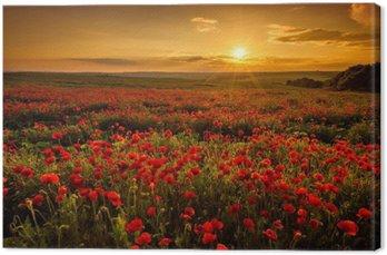 Obraz na Płótnie Pole makowe o zachodzie słońca