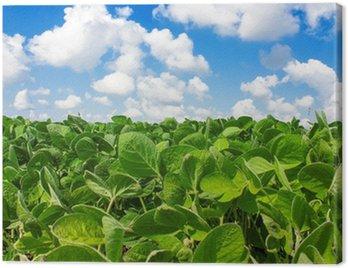 Obraz na Płótnie Pole młodych roślin soi
