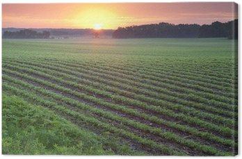 Obraz na Płótnie Pole soi o wschodzie słońca
