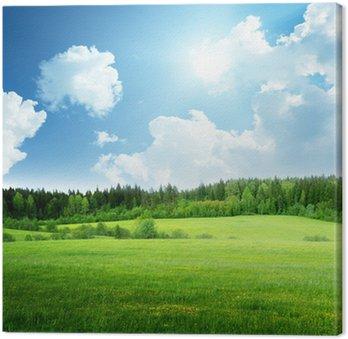 Obraz na Płótnie Pole trawy i perfect sky