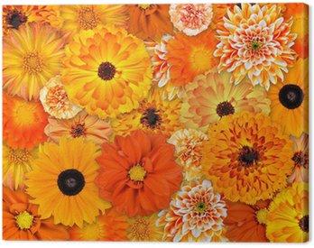 Obraz na Płótnie Pomarańczowy kwiat tła