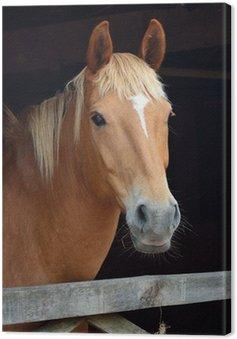 Obraz na Płótnie Portret kasztanowy koń