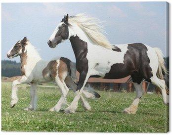 Obraz na Płótnie Portret ładny koni arabskich