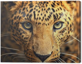Portret leopard