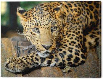 Obraz na Płótnie Portret leopard