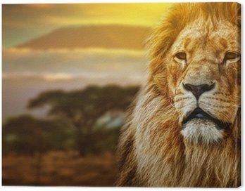Obraz na Płótnie Portret Lion na tle sawanny i Kilimandżaro