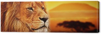 Obraz na Płótnie Portret lwa na sawannie. Kilimandżaro o zachodzie słońca. safari