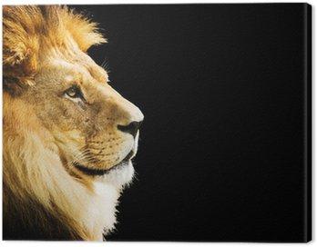 Obraz na Płótnie Portret lwa z przestrzeni kopii na czarnym tle