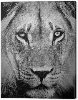 Obraz na Płótnie Portret lwa