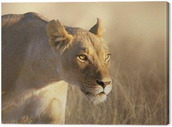 Obraz na Płótnie Portret lwica