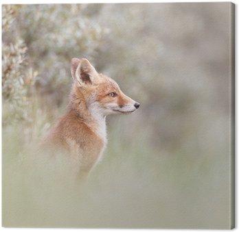 Obraz na Płótnie Portret Red Fox cub