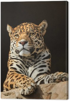 Portret z bliska, jaguar lub onca Panthera
