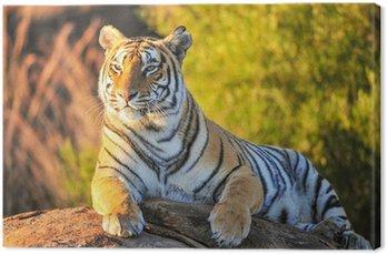 Obraz na Płótnie Portret z tygrysa