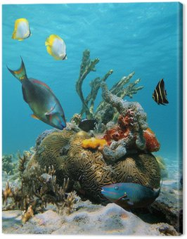 Obraz na Płótnie Powierzchni wody i morskiego życia
