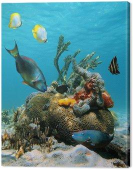 Powierzchni wody i morskiego życia