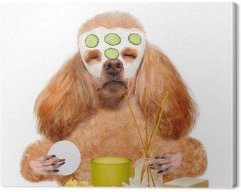 Obraz na Płótnie Prać w spa psa