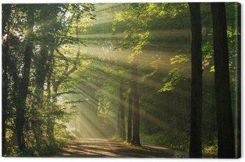 Obraz na Płótnie Promienie słońca shining poprzez drzew w las.