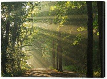 Promienie słońca shining poprzez drzew w las.