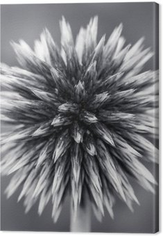 Obraz na Płótnie Purpurowy Globe Thistle B