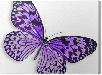Purpurowy motyl latający