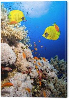 Obraz na Płótnie Rafa koralowa i Masked Butterfly Fish