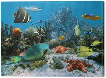 Rafa koralowa i rozgwiazdy