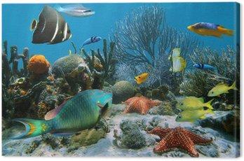Obraz na Płótnie Rafa koralowa i rozgwiazdy