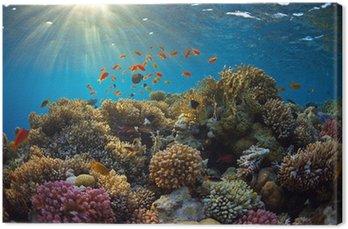 Obraz na Płótnie Rafa koralowa