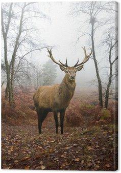 Red Deer Stag w mglisty mglisty krajobraz lasu jesienią o świcie
