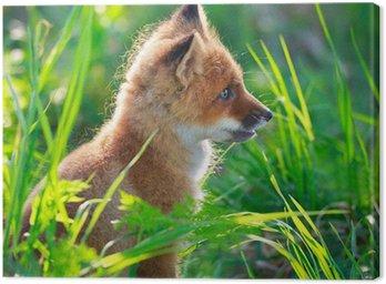 Obraz na Płótnie Red Fox psinka