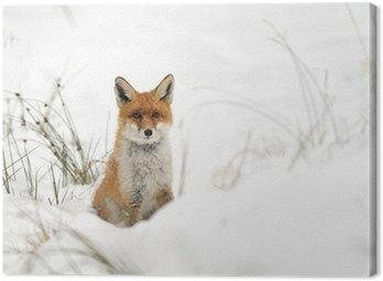 Obraz na Płótnie Red Fox w śniegu