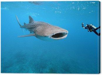 Obraz na Płótnie Rekin wielorybi i podwodnego fotografa