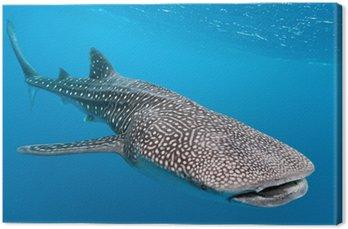 Obraz na Płótnie Rekin wielorybi