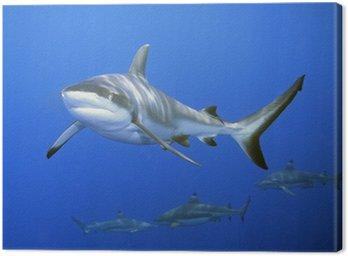 Obraz na Płótnie Rekiny