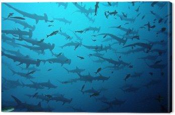 Obraz na Płótnie Requin marteau w banku Galapagos