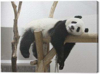 Obraz na Płótnie Reszta panda