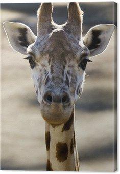 Rezerwaty i zwierzęta - Żyrafa