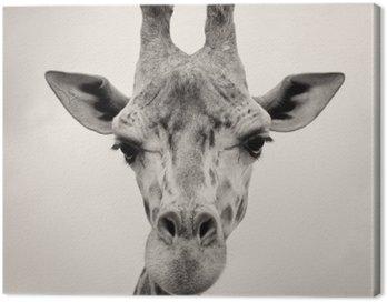 Obraz na Płótnie Rocznika sepia obraz szefa Żyrafy
