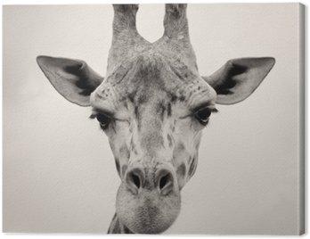 Rocznika sepia obraz szefa Żyrafy