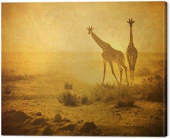 Rocznika wizerunek żyrafy w Amboseli National Park, Kenia