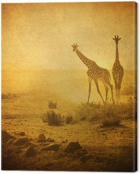 Obraz na Płótnie Rocznika wizerunek żyrafy w Amboseli National Park, Kenia