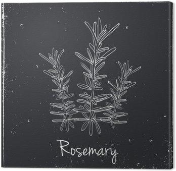 Obraz na Płótnie Rosemary ziół i przypraw.