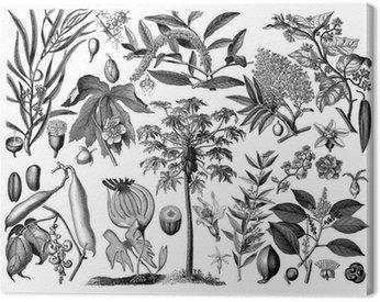 Obraz na Płótnie Rośliny - Botanika